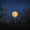 Week 16 of 52 Weeks in Eagan<br /> <br /> We were given the opportunity to see a full lunar eclipse on April 15th. When I should have been sleeping I was busy waking up off and on during the night to capture the Blood Moon eclipse. Then on my way to work the setting moon was bright yellow/orange on the horizon