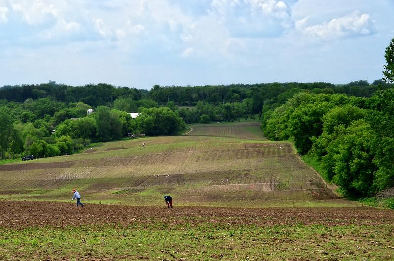 Urban farmers planting the fields