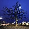 Eagan Lone Oak