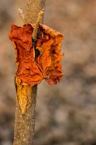 last year's leaf