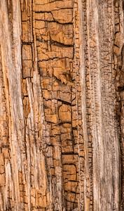 dead log