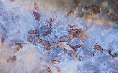 iced leaves