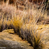 Golden Rock & Grass