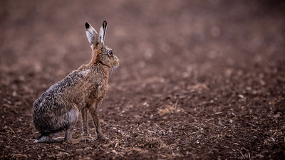 Wet Hare Day