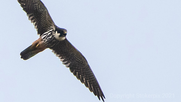Hobby in flight and in call