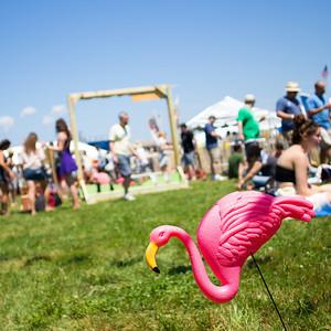 Flamingo | Newport Folk Festival, RI