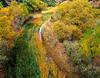 Pine Creek Autumn