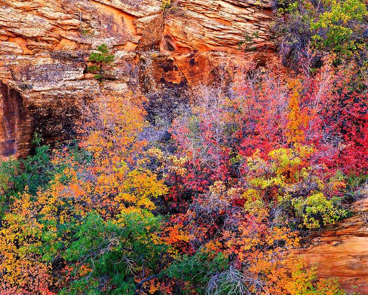 Autumn Above Pine Creek