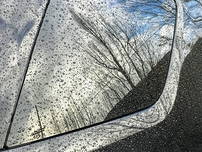 Raindrops with Tree Reflection, Portland, 2017