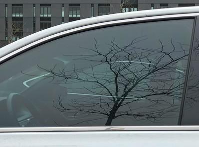 Tree Reflection & Cars, Portland, 2019