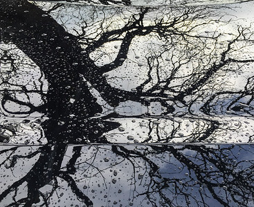 Raindrops & Tree Reflection, Portland, 2016