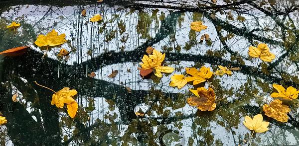 Leaves on Windshield in Rain, Portland, 2020
