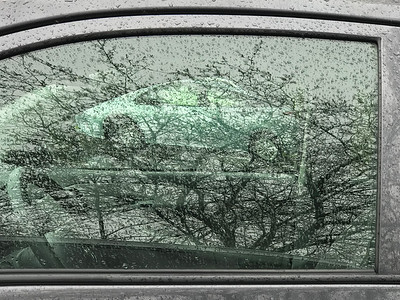 Tree Reflections in Rain, Portland, 2019