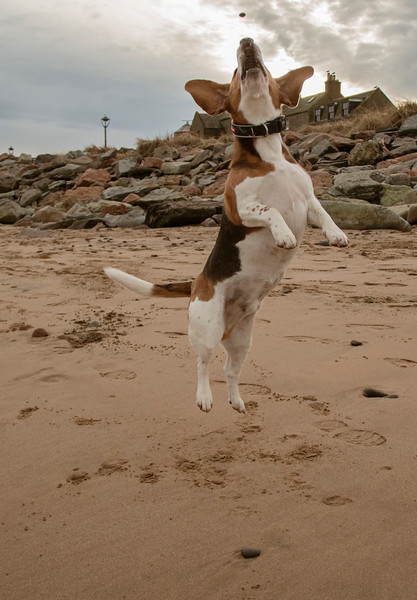 Ozzie jump for a treat.jpg