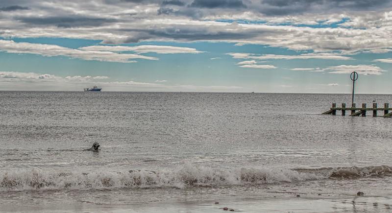 Seal in Aberdeen Beach.jpg