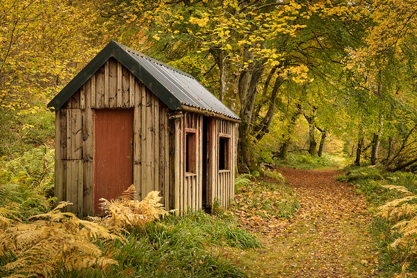 Autumnal Woodland Retreat, Paradise Woods, Aberdeenshire
