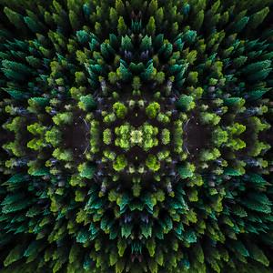 Symme-Tree