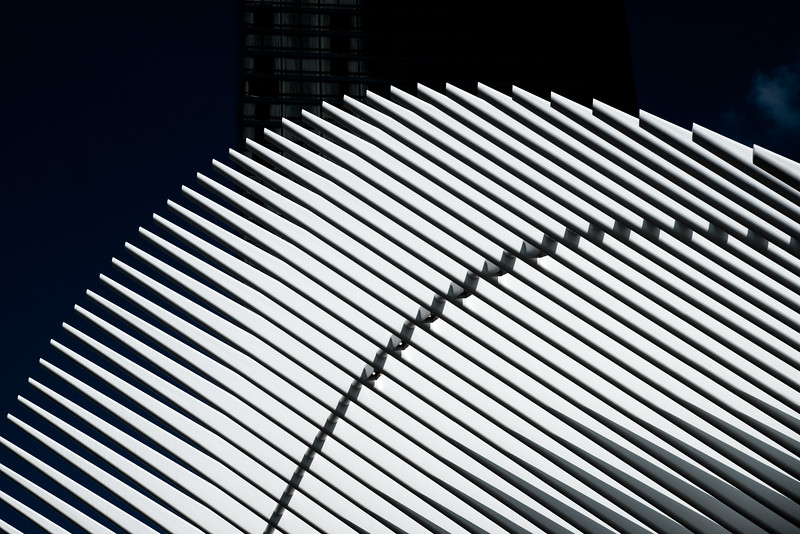 Oculus Feather in the Sky