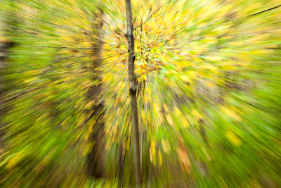 Camden Hills State Park. woods with zoom motion. Maine