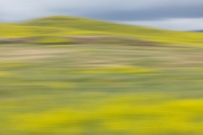 Hills and Mustard Grass, Motion Blur, Irvine Ca.