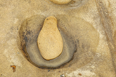Penguin in Sandstone, Point Lobos, Ca.