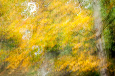 Autumn woods. Motion blur. Camden, Me.
