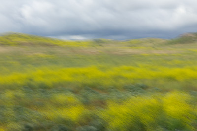 Rolling Hills, Mustard Grass,Motion Blur, Irvine