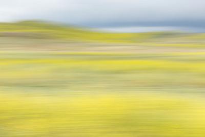 Motion Blur, Irvine Meadow, Ca,
