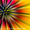 African Daisy Abstract