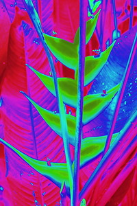 Heliconia in Green
