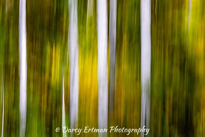 Fall Abstract II