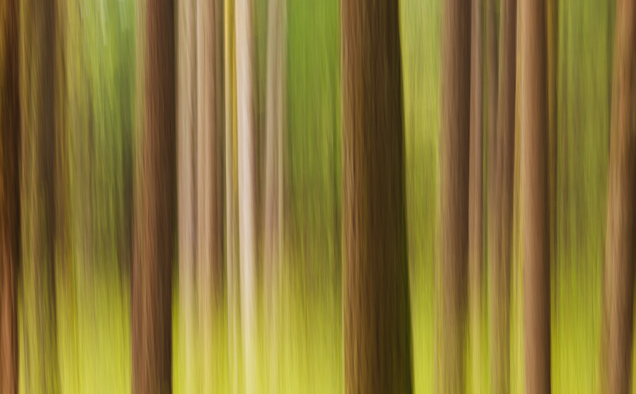 Spring Forest Abstract