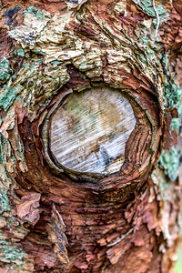 Bark Abstract 2
