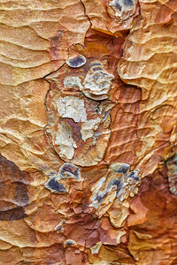 Bark Abstract 3