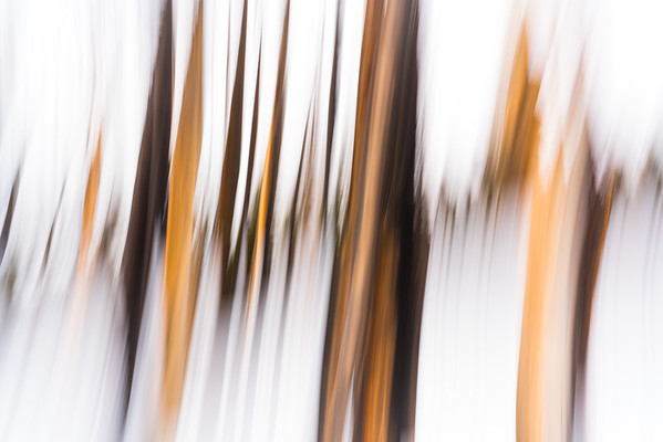 """""""FOREST FREQUENCY"""""""