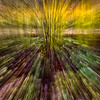 Zoom Burst Dogwood