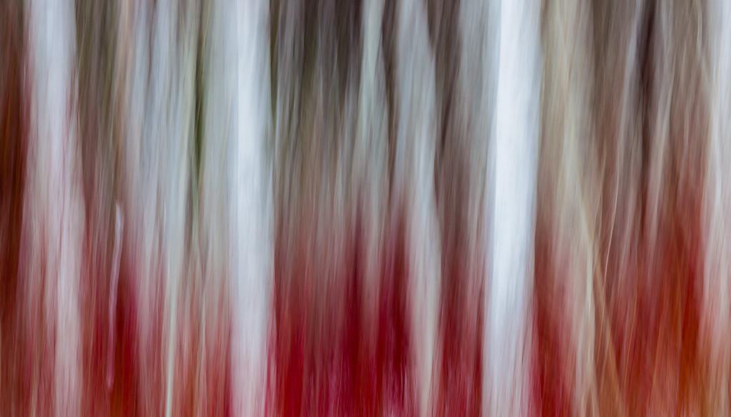 Burning Trees