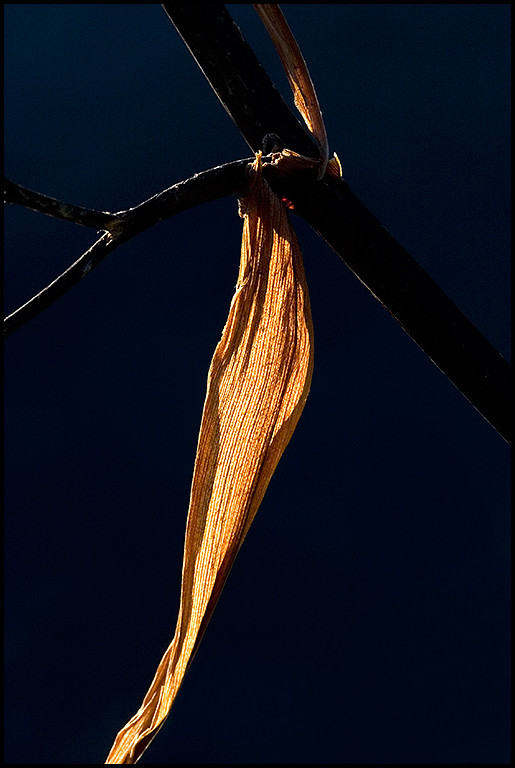<center><i>Twig with Yellow Leaf</i>, #0965</center>