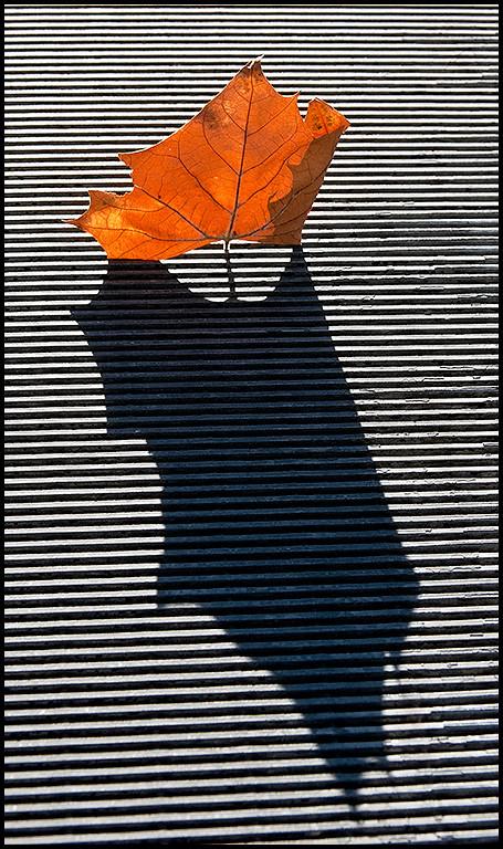 <center><i>Grate Leaf</i>, #2639</center>