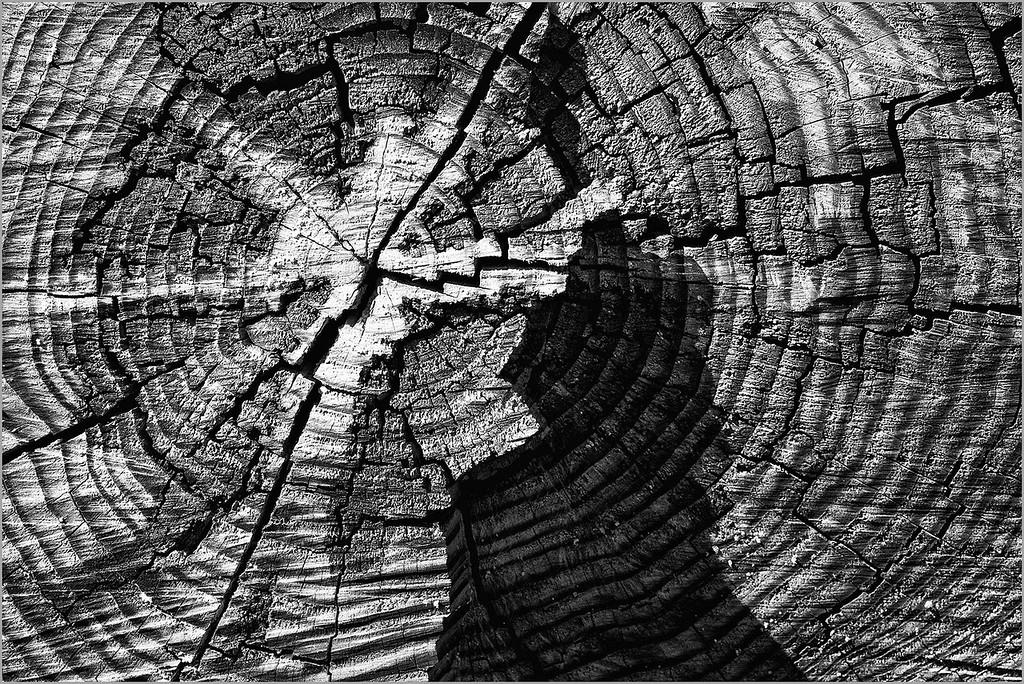 <center><i>Oak Precipice, </i></center>#3659-7DII