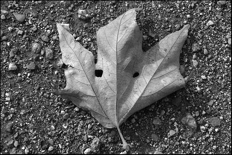 <center><i>Leaf Mask</i>, #6717</center>