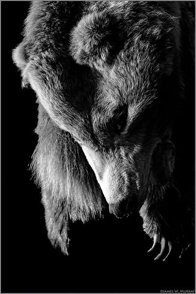 Tavern Mascot Bear, Scotts Valley, CA ...[DSF.2017.8630]