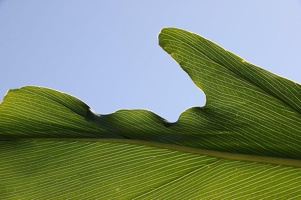 <center><i>Leaf</i>, #3803</center>