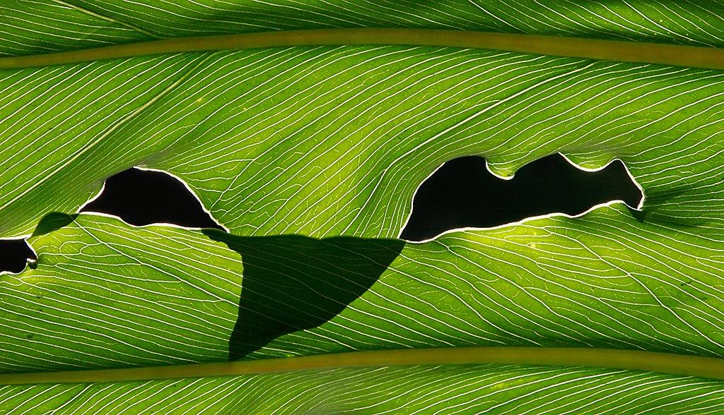 <center><i>Leaf</i>, #3823</center>