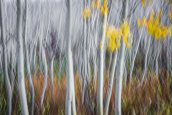 A-LN_Fritz-Rumpf_Nature-Abstract