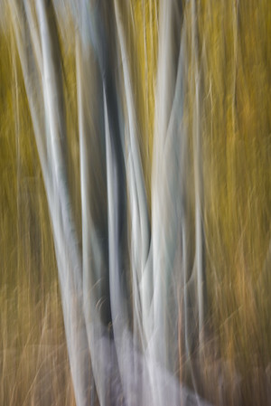 Abstract Trees, Intentional Camera Movement