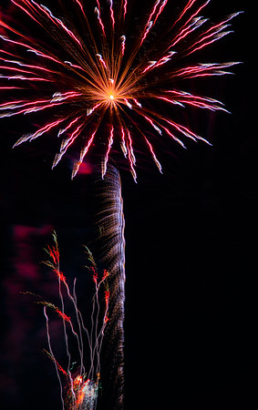 'Ocotillo under Palm Tree', 4th of July fireworks, Tempe Town Lake. Intentional Camera Movement