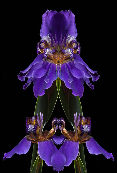 Alien Iris
