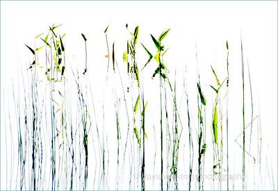 Reeds Deconstructed