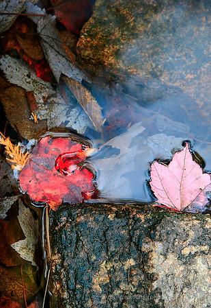 Red Leaf,Pink Leaf II
